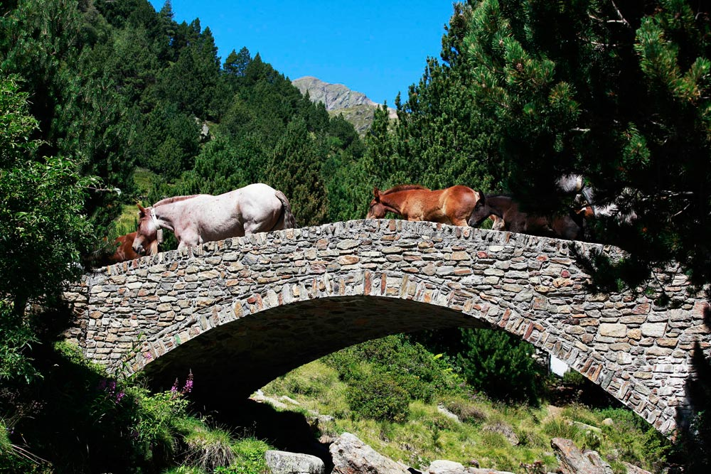 Andorra Walking Festival Sorteny Valley
